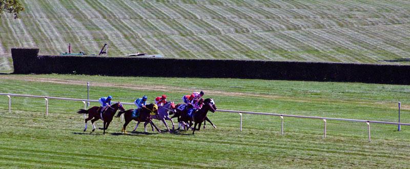 Hourse Race
